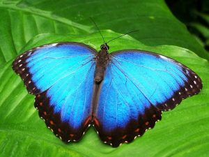 The Butterfly Conservatory Sloth of The Day