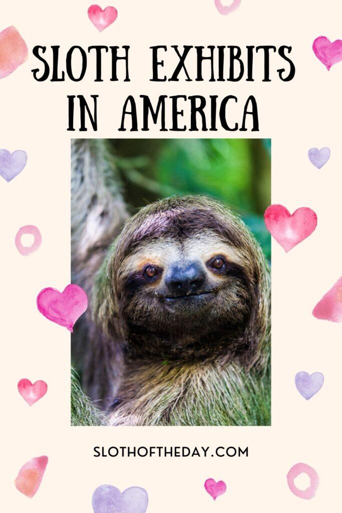 8 New Sloth Exhibits in America