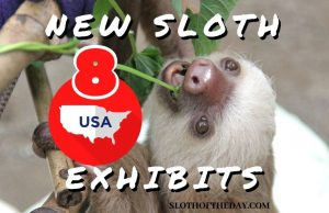 8 New Sloth Exhibits in The United States - Sloth of The Day