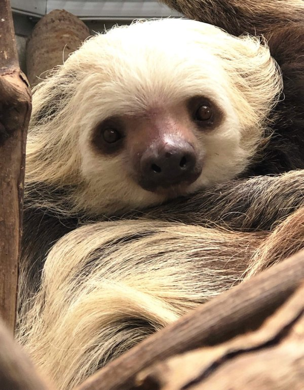 Buttonwood Park Zoo New Sloth Exhibit