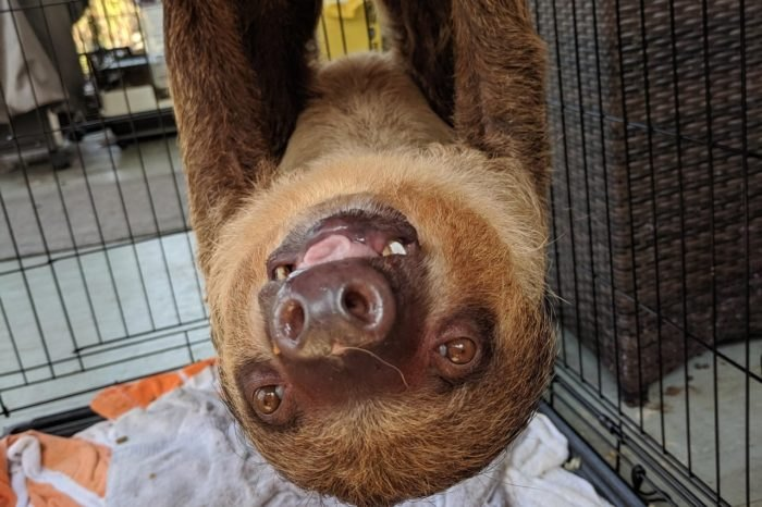 Charleston Sloths and Exotics Charleston New Sloth Exhibits