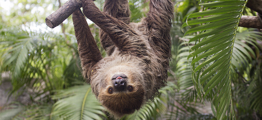 Louisville Zoo Sloth Coming Soon