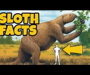 Ten Interesting and Fun Facts About Those Unusual Sloths
