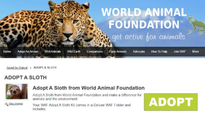 World Animal Foundation Sloth Adoption Program
