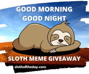 Sloth Memes Giveaway – Win Sloth Meme Shirt or Sloth Meme Cup