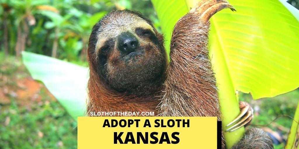 Sloth Adopting Program in Kansas - Sloth of The Day