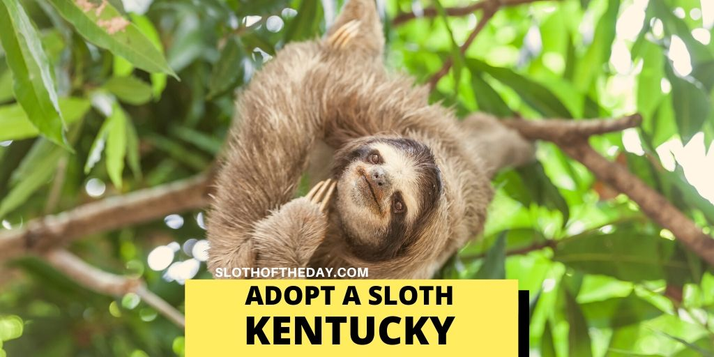 Sloth Adopting Zoo in Kentucky - Sloth of The Day