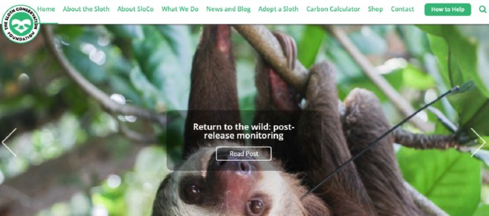 The Sloth Conservation Foundation