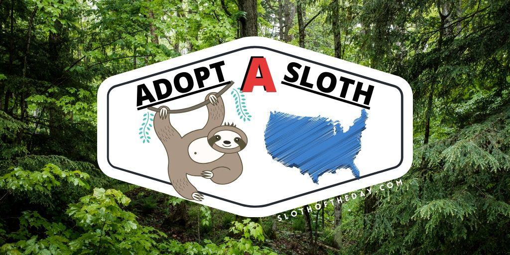 USA Sloth Adoption Programs