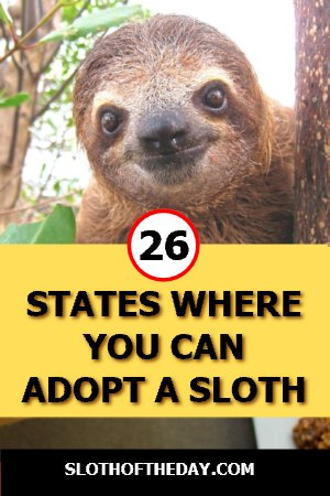 26 States Where You Can Adopt A Sloth in America