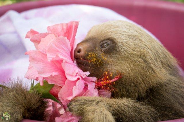 Brad Pitt Sloth at Toucan Rescue Ranch
