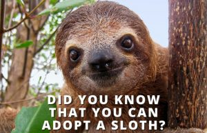 Did You Know That You Can Adopt a Sloth