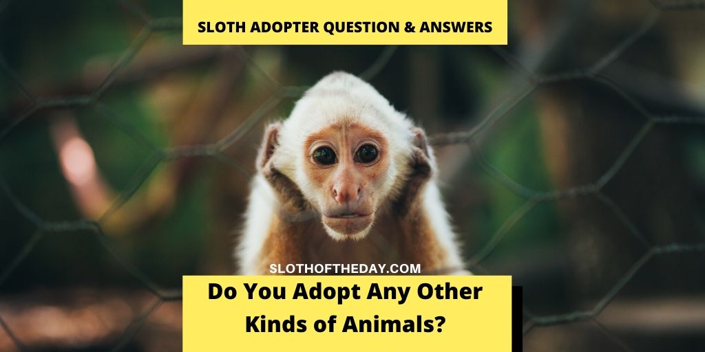 Do You Adopt Any Other Kinds of Animals - Experienced Sloth Adopter Questions Answers