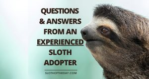 Question and Answer Experienced Sloth Adopter
