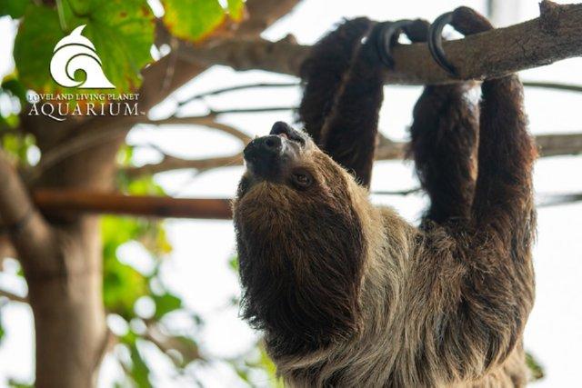The Living Planet Aquarium Sloth