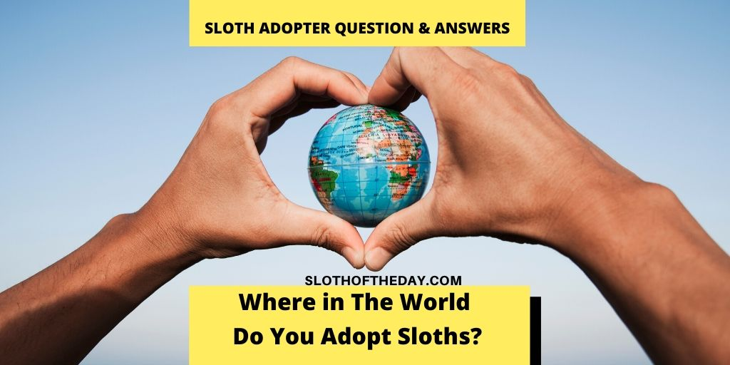 Where in The World Do You Adopt Sloths