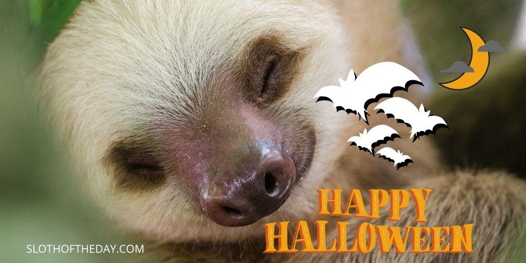 Sloth Halloween Scary Night