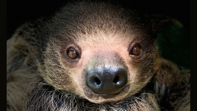 Learn About The Red River Rock Zoo Home of Milo the Sloth