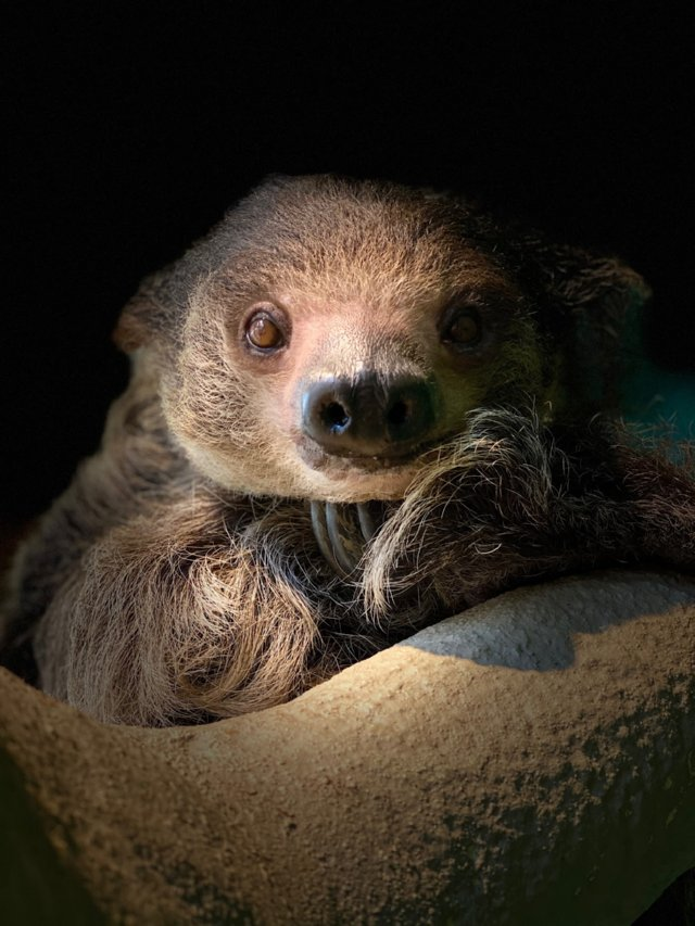 Milo The Sloth Smiling