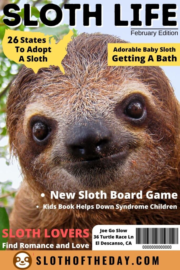 Sloth Life At Sloth of The Day February Edition Pin