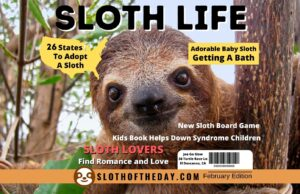 Sloth Life At Sloth of The Day February Edition Post
