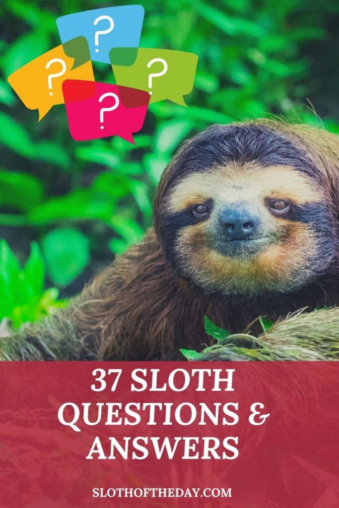 37 Sloth Questions and Answers