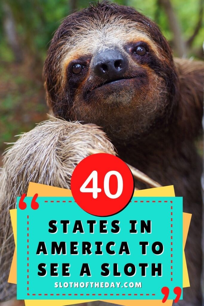 40 States in America to See a Sloth by Sloth of The Day Pin