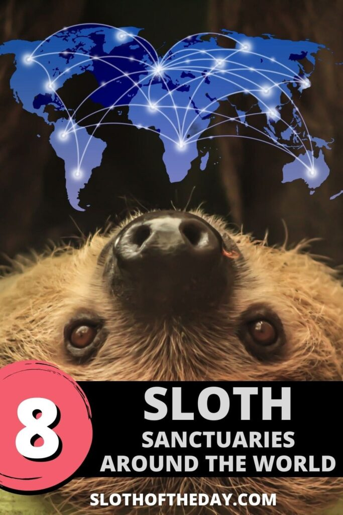 8 Sloth Sanctuaries Around The World by Sloth of The Day Pinterest