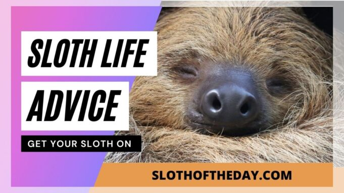 Sloth Life Advice Videos from Sloth of The Day