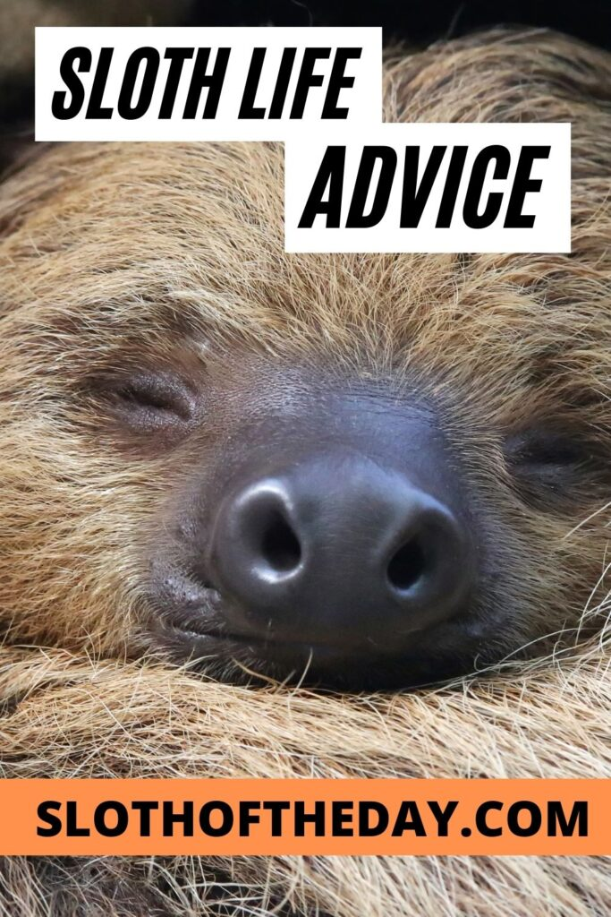 Sloth Life Advice from Sloth of The Day Pin