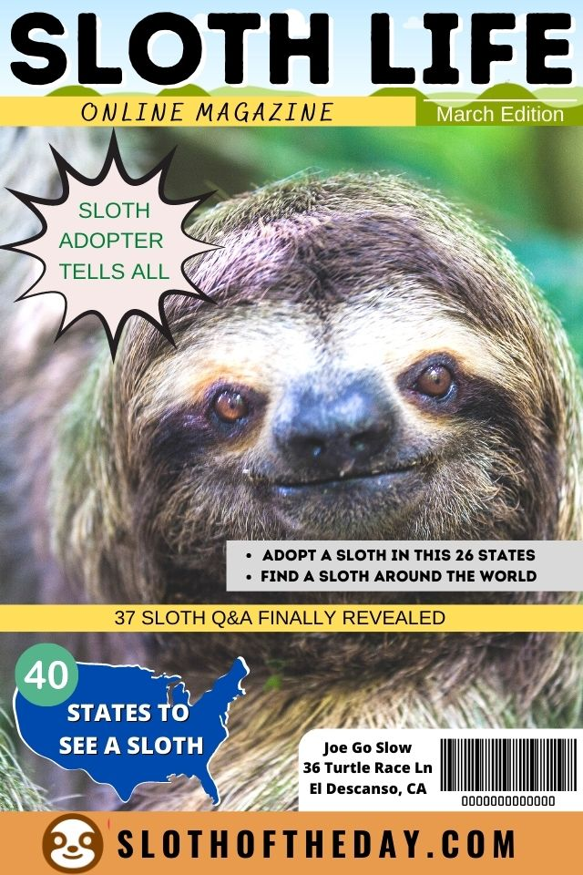 Sloth Life Online Magazine March Edition Pinterest Pin