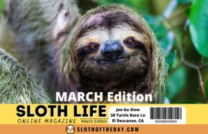 Sloth Life Online Magazine March Edition Sloth Twitter Post