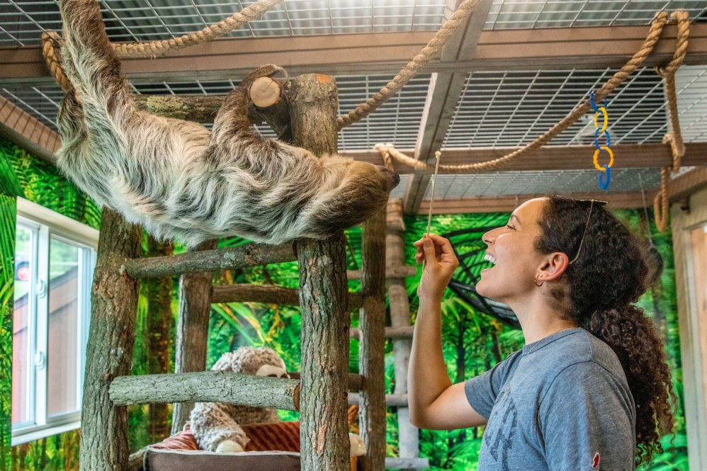 Can someone have Sloth Experience at The Lewis Adventure Farm and Zoo