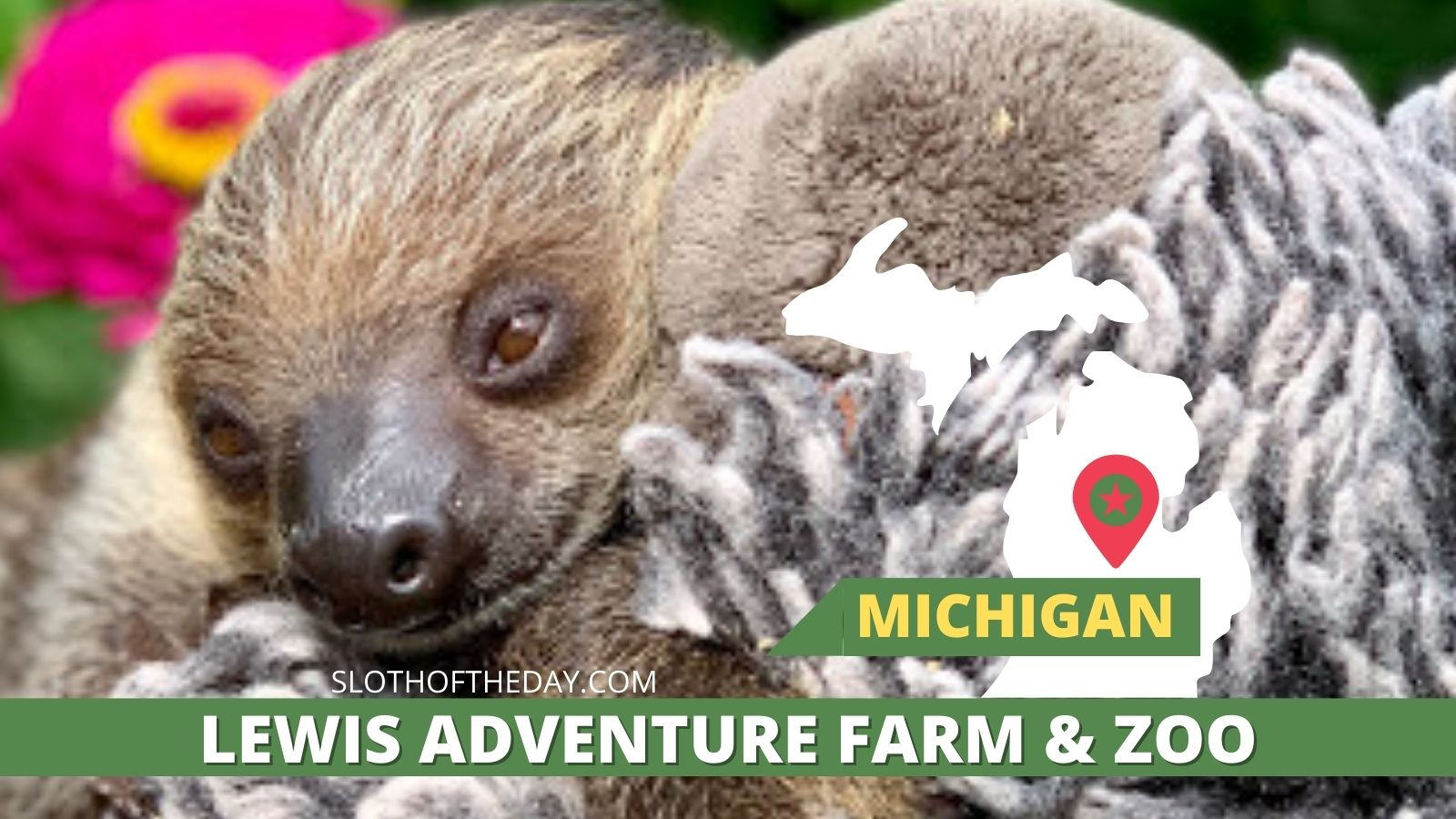 Sid the Sloth Lewis Adventure Farm and Zoo Michigan Sloth