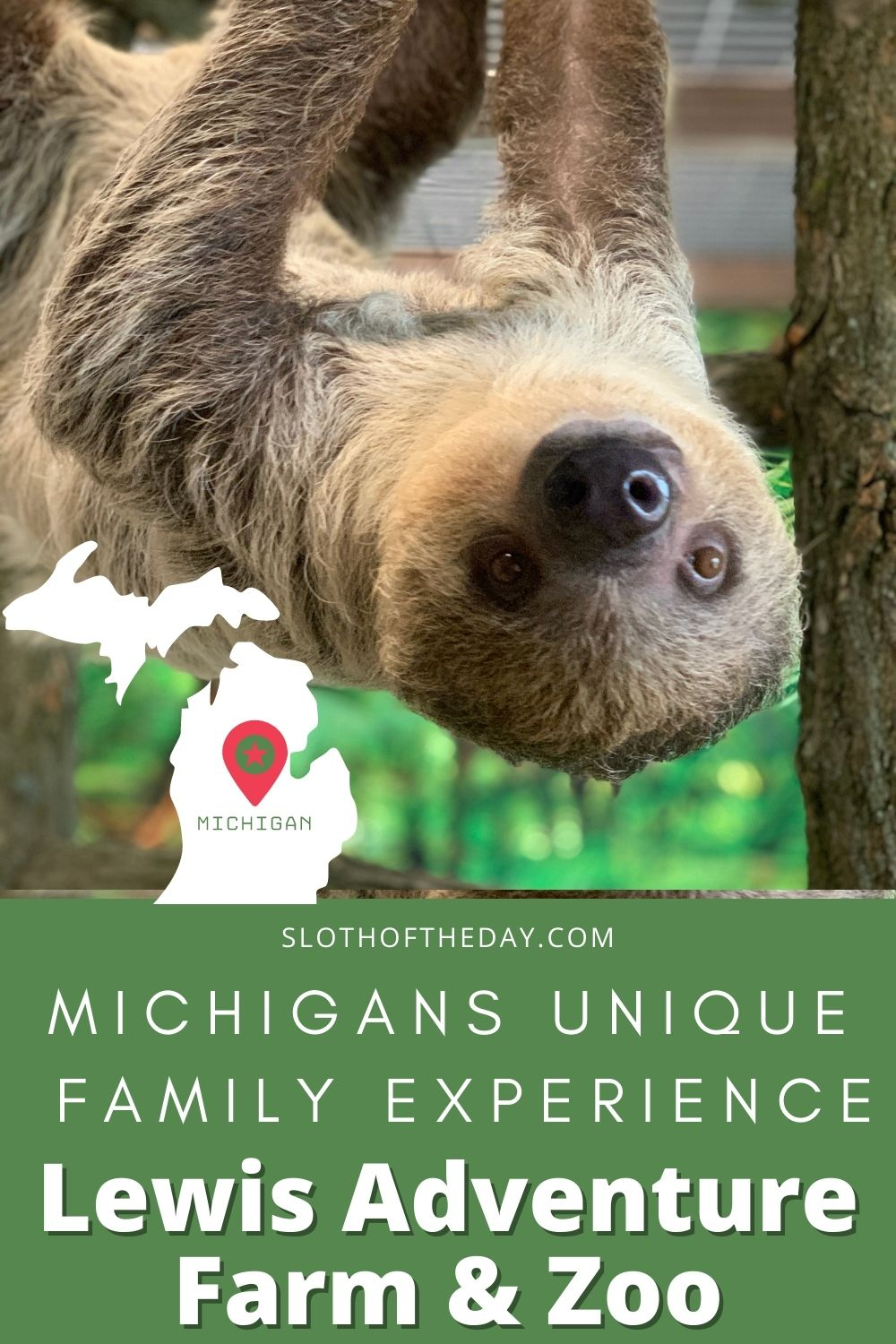 Sloth in Michigan Lewis Adventure Farm and Zoo Sloths Pin