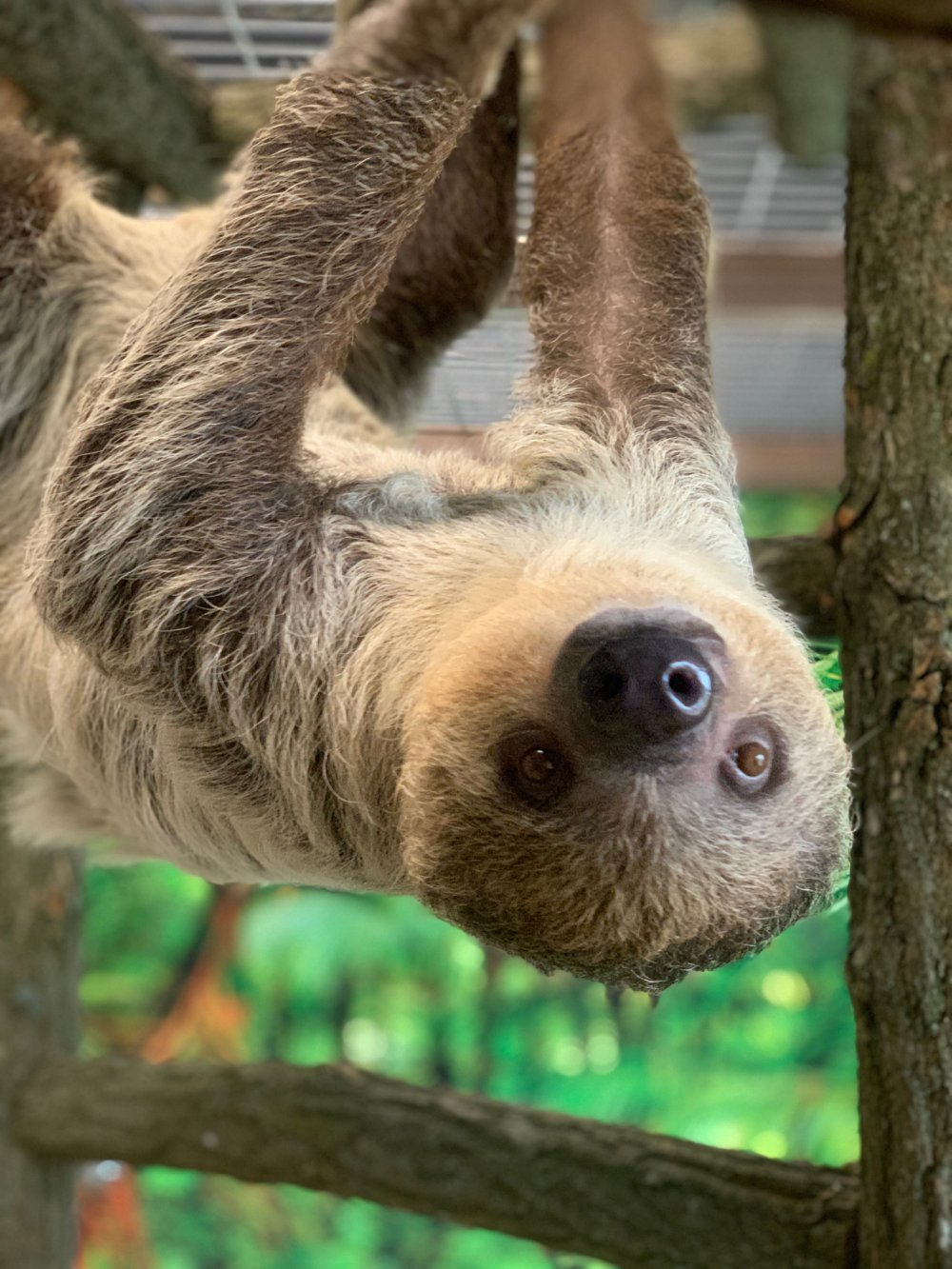 Sloths at The Lewis Adventure Farm and Zoo