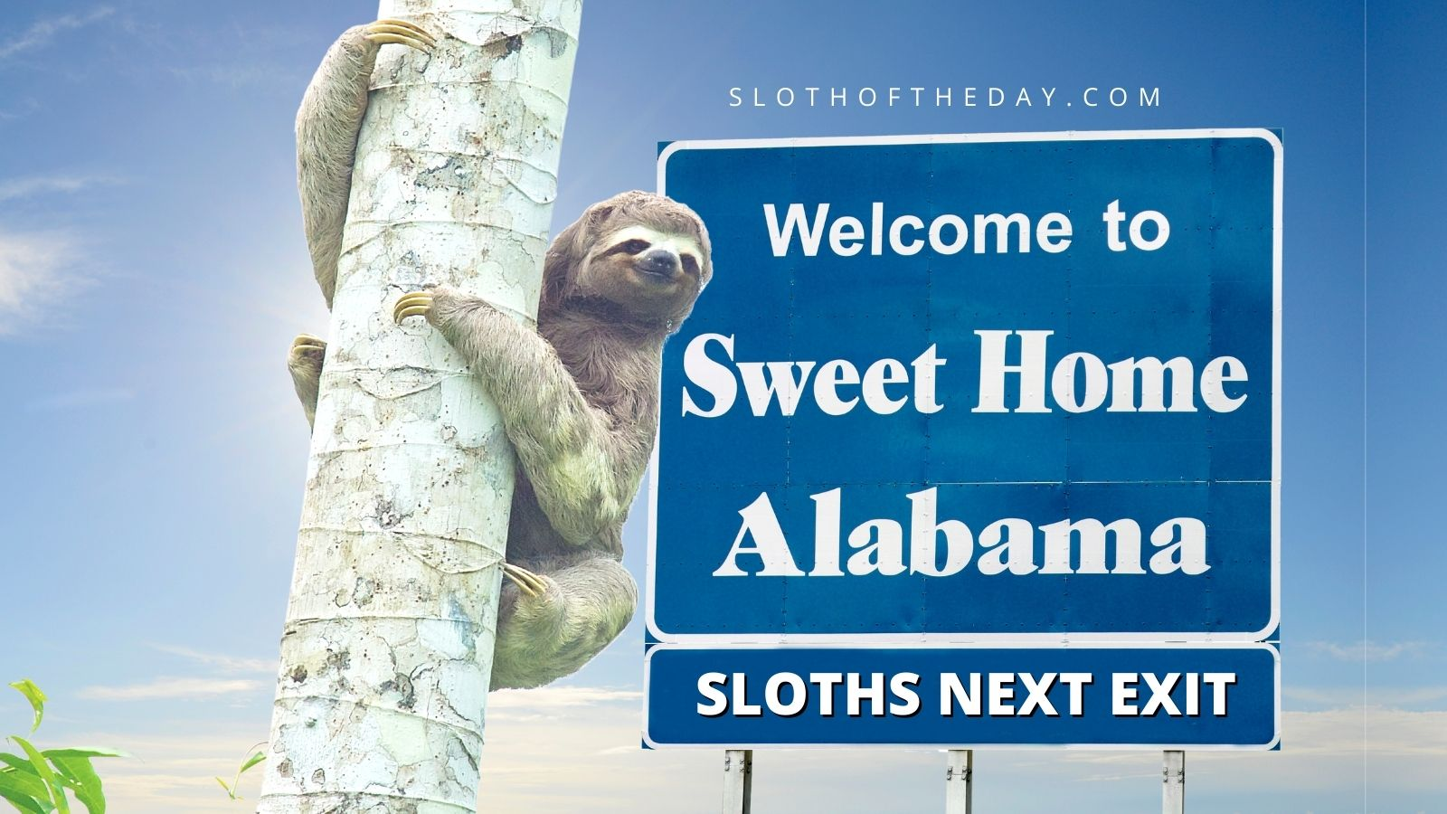 See Hold Sloths in Alabama Sloth Experience Sloth of The Day