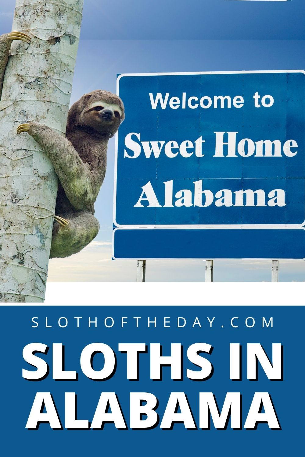 See Hold Sloths in Alabama Sloth Experience