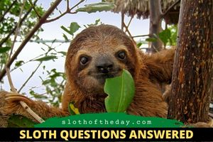 Why Are Sloths in Central America